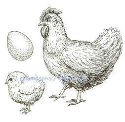 Chicken Hen Chick & Egg Clear Unmounted Rubber Stamp Nellie'
