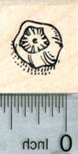 barnacle rubber stamp