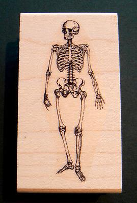 "P19 Skeleton 3x1"" rubber stamp WM"