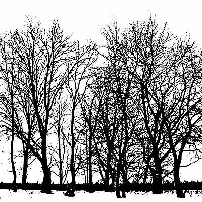 tree line cover a card background unmounted