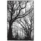 TREE WOODLAND Photo Stamp Cling Unmounted Rubber Stamp DARKR