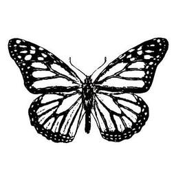 Monarch Butterfly unmounted rubber stamp, bug, summer, Sweet