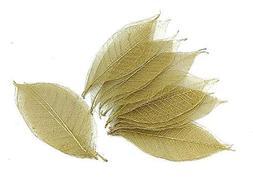NAVA CHIANGMAI Rubber Tree Leaves - Pack of 100 Skeleton Lea