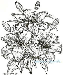 Stargazer Lilies Flower Blossoms Wood Mounted Rubber Stamp N