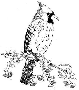 unmounted rubber stamp bird stamps flowers nature