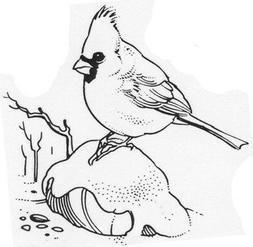 Unmounted Rubber Stamp, Bird Stamps, Nature, Birds, Baby Car
