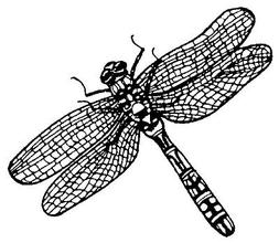 Unmounted Rubber Stamps, Dragonflies, Insects, Dragonfly Sta