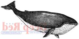 Deep Red Stamps Whale Rubber Cling Stamp