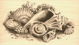 Inkadinkado Wood Mounted Rubber Stamp PP-Seashells Still Lif